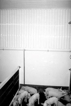 """Picture of 36"""" x 16'-2"""" Corrugated PVC liner"""