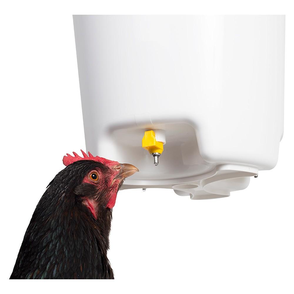 Chicken Drinking Bucket With 3 Nipples Hog Slat
