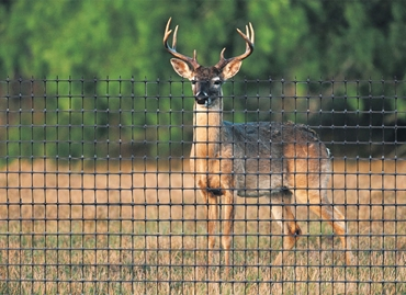 Picture for category Poultry & Deer Fencing