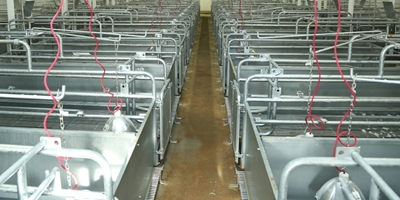 Remodeling project increases farrowing crate footprint.