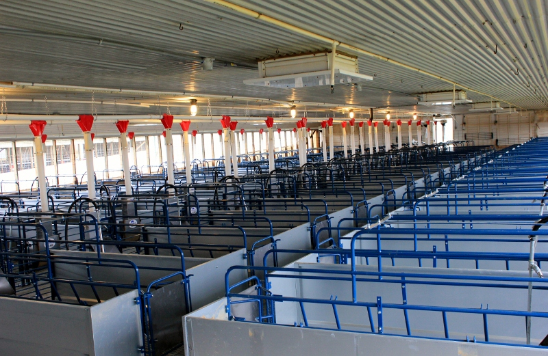 farrowing crates (800x521)
