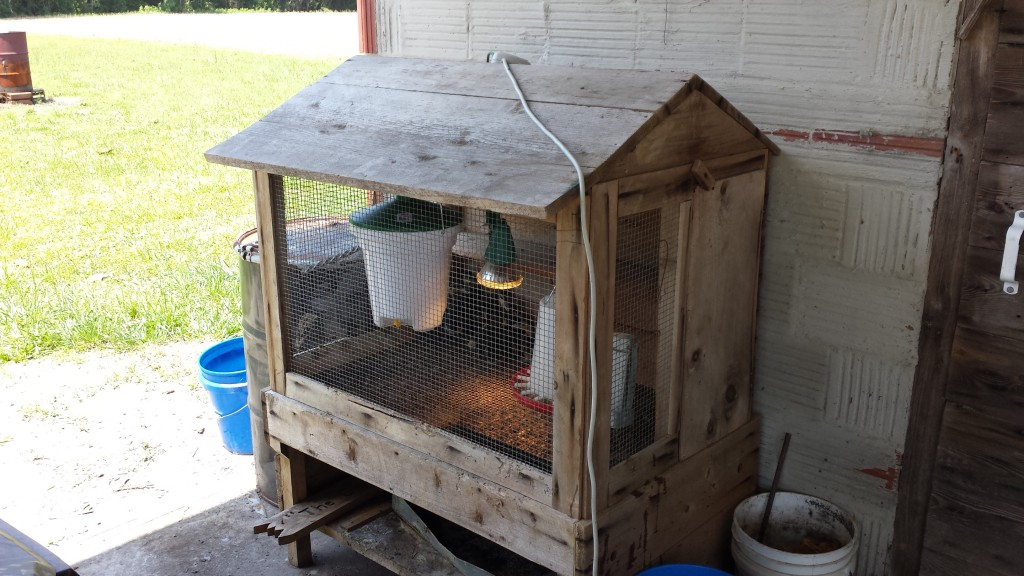CBP Outdoor Brooder Setup