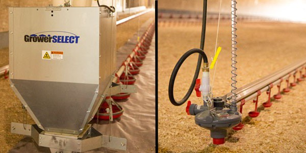 GrowerSELECT feed line and Plasson ON-DEMAND drinker lines.