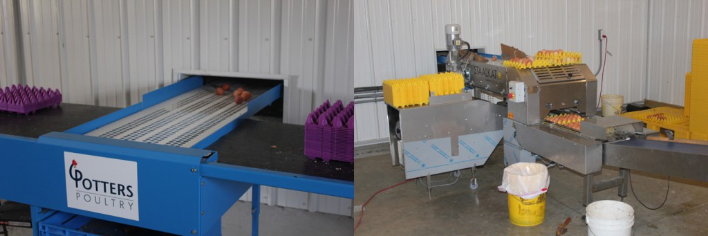 Manual egg packer and automatic version shown