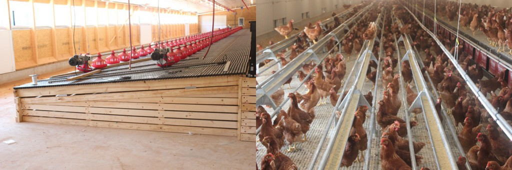 Raised flooring with either pan feeders or chain feeding