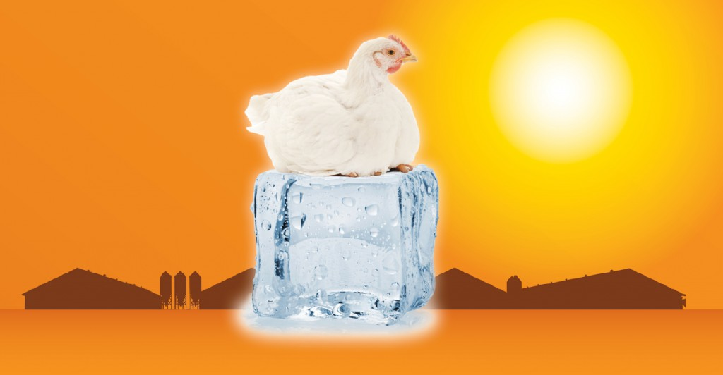 Ice Cube Chicken