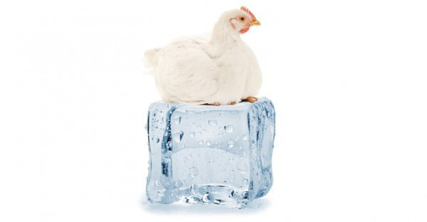 Ice-Chicken-web