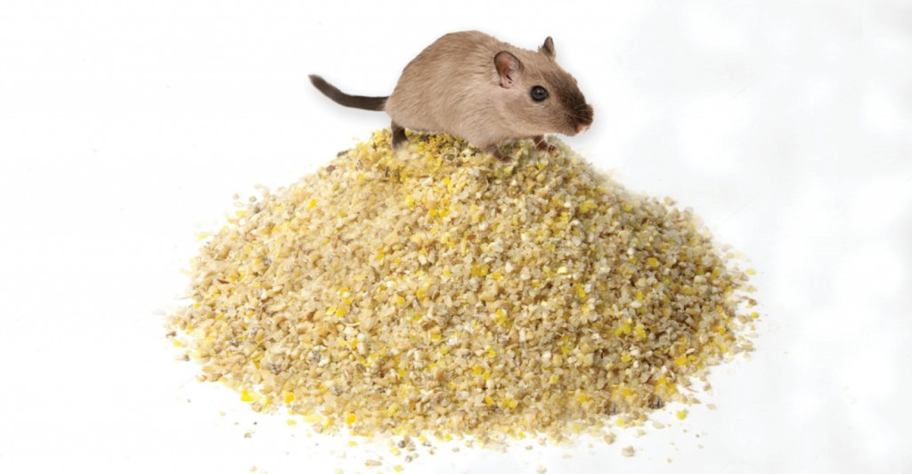 Mouse-Feed-Pile-1540x800