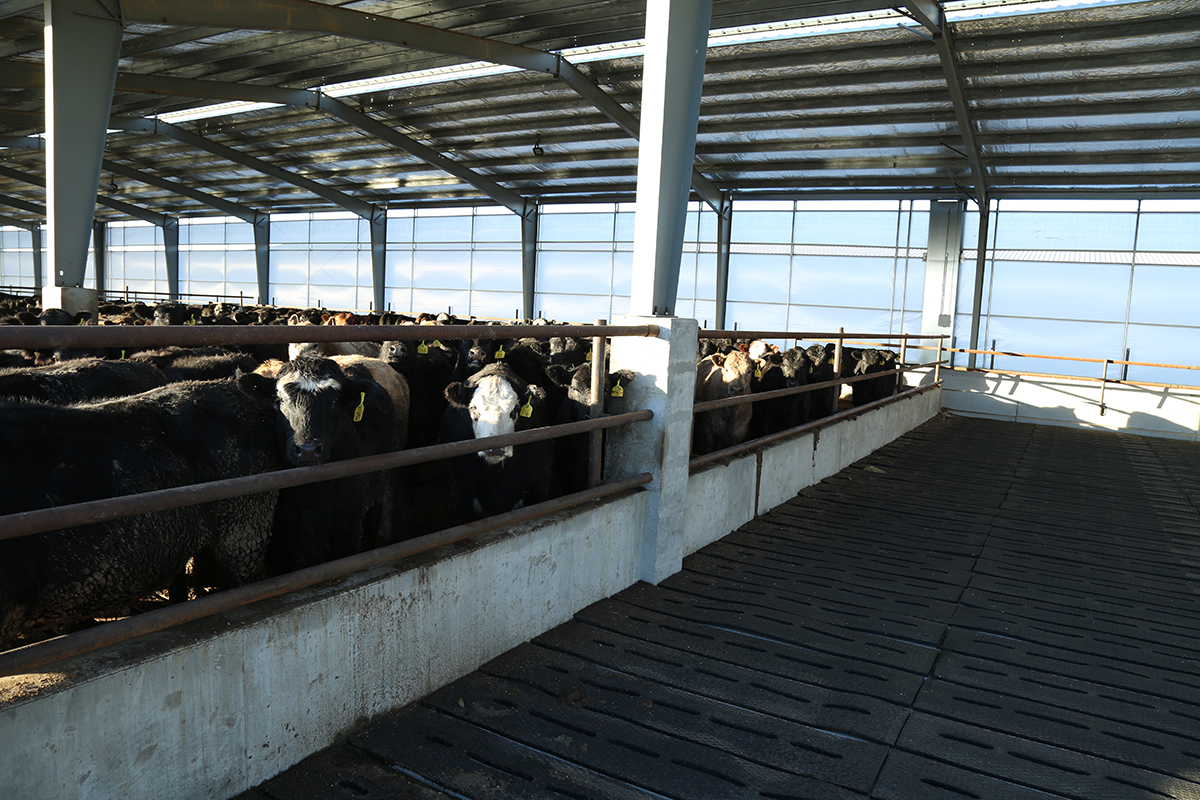 loaded-deep-pit-cattle-pen.jpg