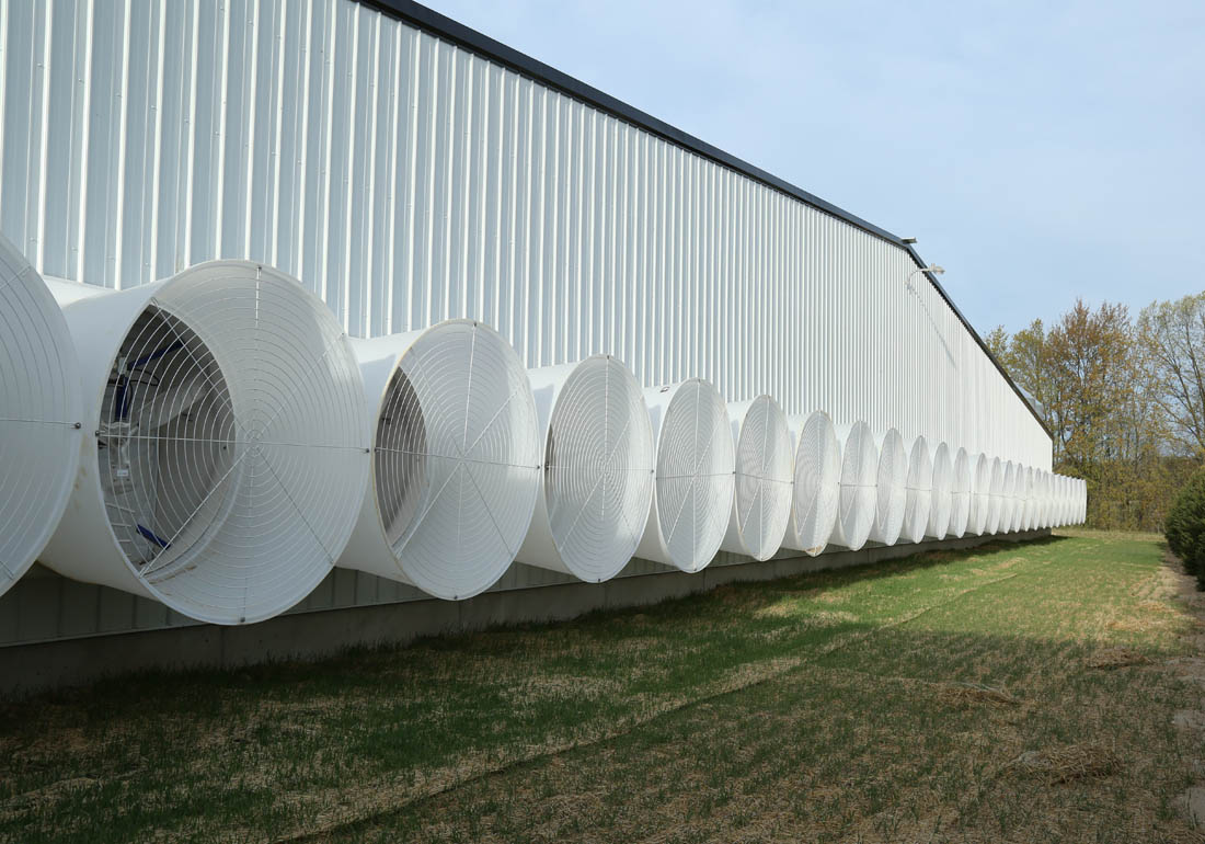 "54"" AirStorm fiberglass fans on a gestation barn"