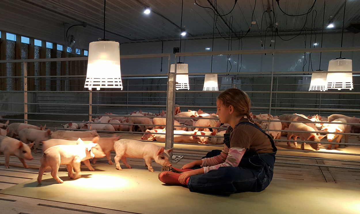 The Hog Slat® Poly Heat Lamp is a quality supplemental heat option for piglets in farrowing and young pigs after weaning.