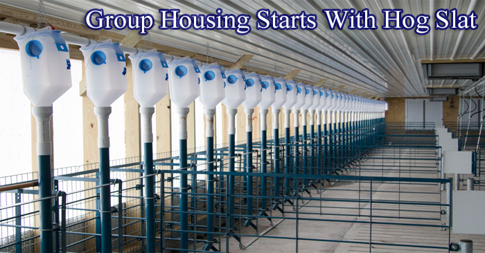 Hog Slat Group Housing Stanchions