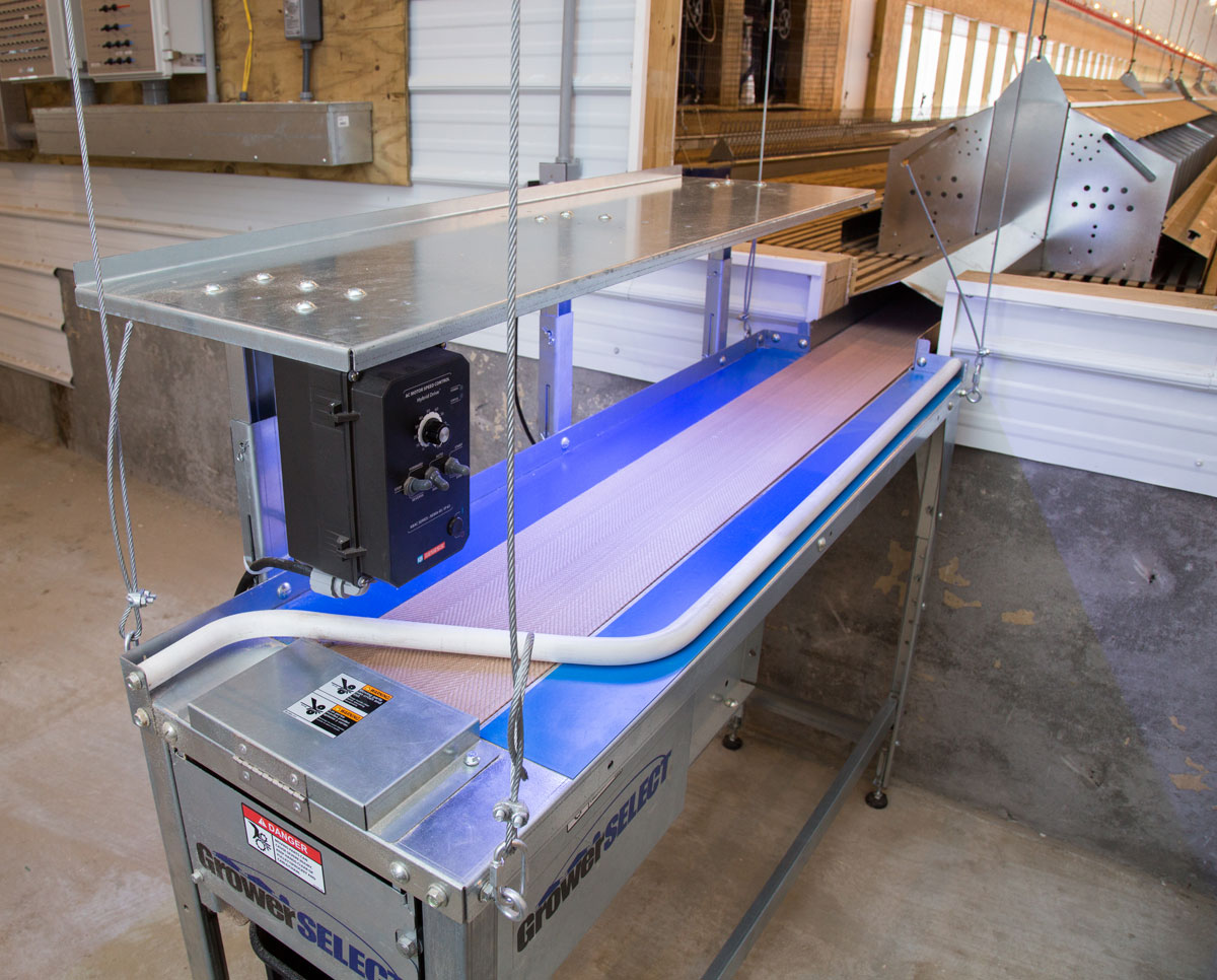 GrowerSELECT center-belt egg collection table installed on a broiler breeder farm in North Carolina. (Item # GSN-5300)