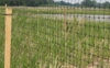 Picture of C-Flex Deer Fence