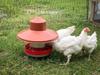 """""""Flex"""" Metal Chicken Feeder w/ Rain Hat & Chickens"""