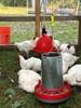 """FARMSTEAD """"Flex"""" 22 LB Metal Chicken Feeder Hanging w/ Chickens Feeding"""
